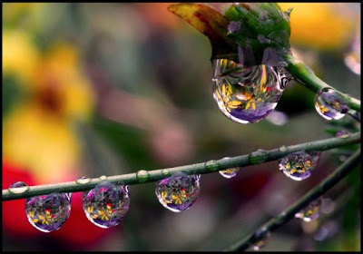 rain droplet photographs