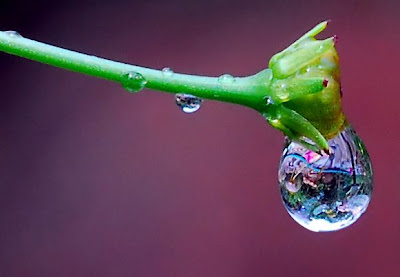 rain droplets pics
