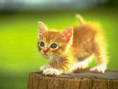 Cute Images and Pictures Of CAT