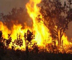 Fotos de queimadas na Amazonia