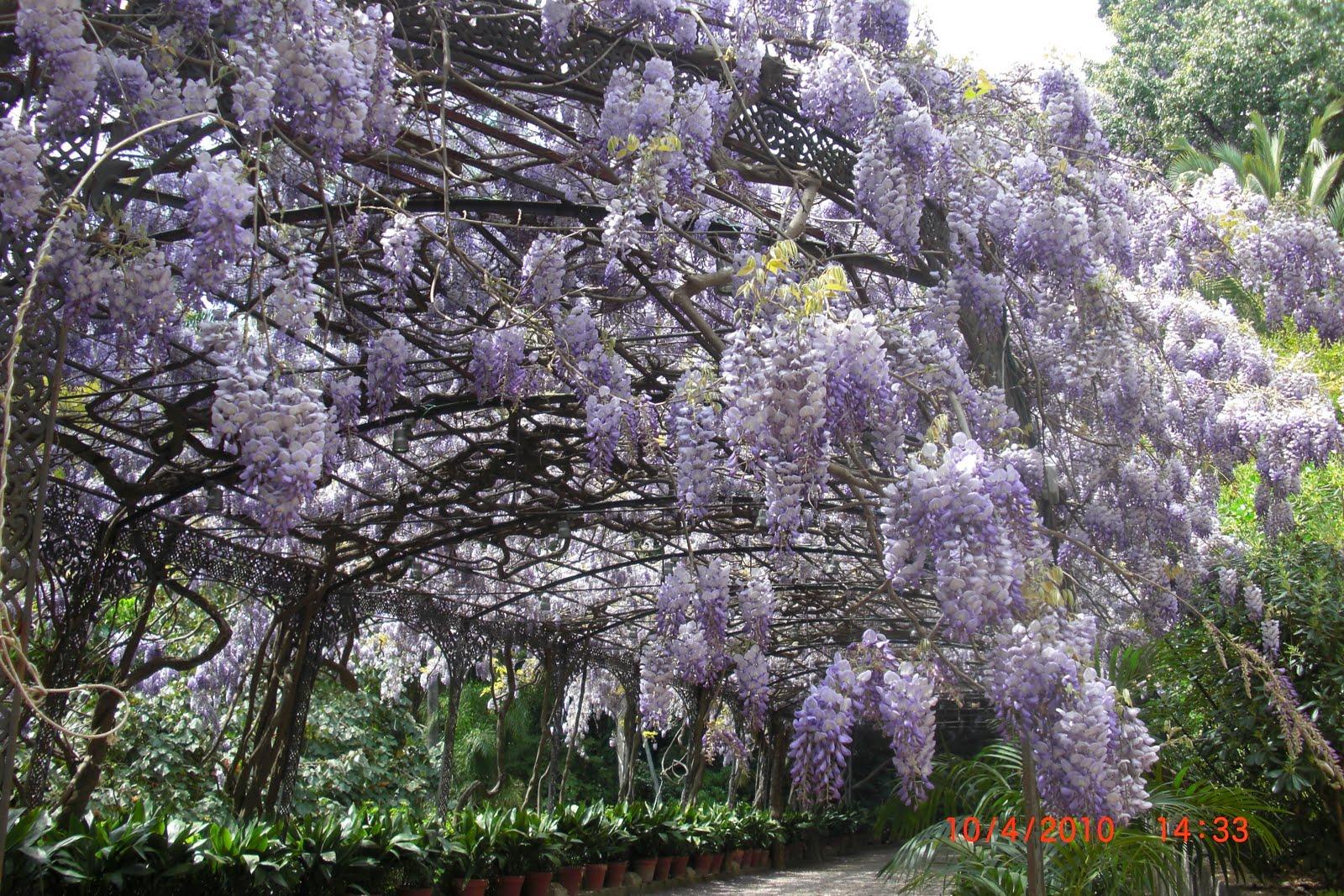 Nuestra m laga jard n bot nico la concepci n for Jardin botanico de malaga