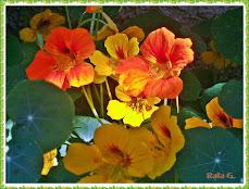 Visita mi blog sobre jardinería