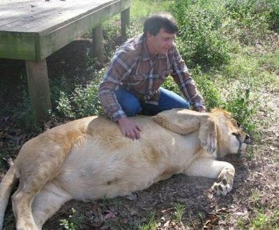 Brothers 04 Foto foto Persaudaraan Antara Beruang, Singa Dan Harimau (Bagaimana Bisa?)