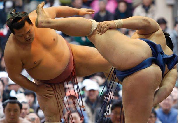 Dos osos japoneses practican el sumo en la cama