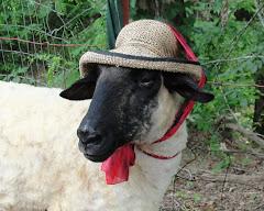 Beatrix dons her bonnet...