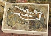 Giant Scorpian