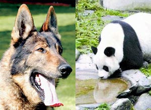 A dog and a panda bear