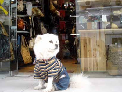 Dog dressed in jeans and t-shirt