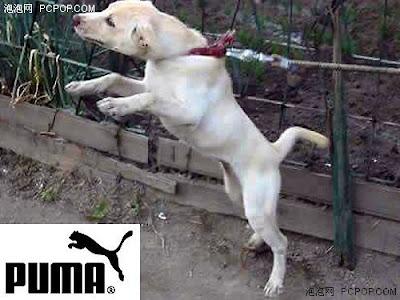 Fake PUMA Logo