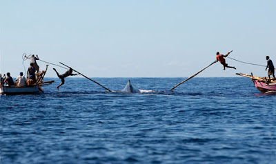Catching a whale