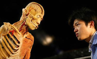 The Amazing Human Body exhibition