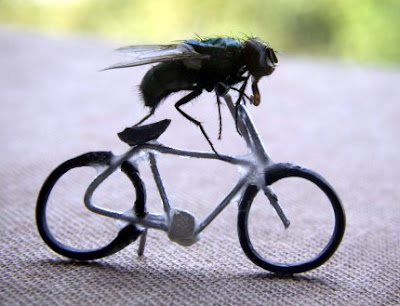 Fly on a bicycle