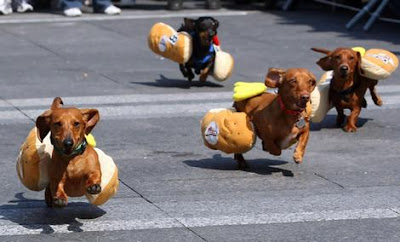 Running of the Wieners