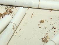 Cigarette Beetle larvae