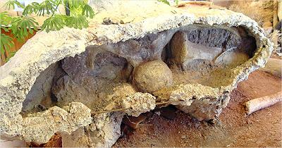Fossil of Futalognkosaurus dukei