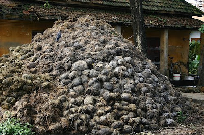 pile of dung