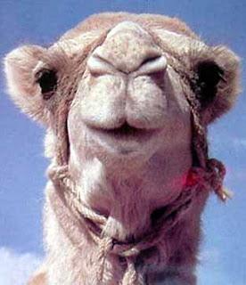Camello - Naica
