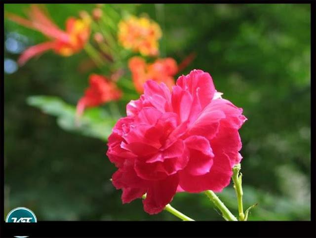 Kerala images