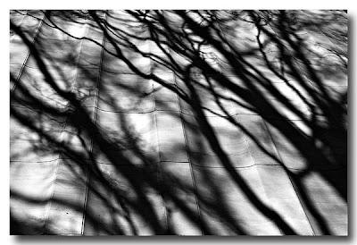 Taft Memorial Shadows - Washington DC