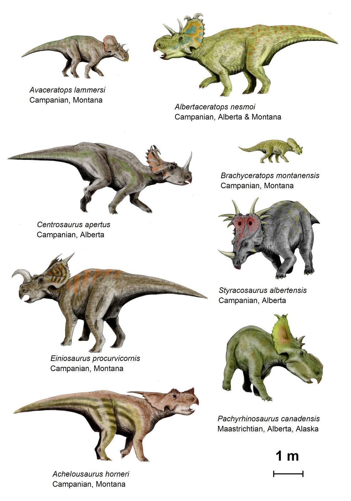 http://2.bp.blogspot.com/_ozM12geiang/TAbGgV7MDII/AAAAAAAAA3I/oiJum_veIJw/s1600/tamura+centrosaurines.jpg