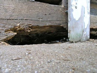 Dover Projects: Repair Wood Rot: Epoxy Wood Filler