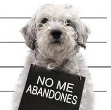 Di NO al abandono y al maltrato
