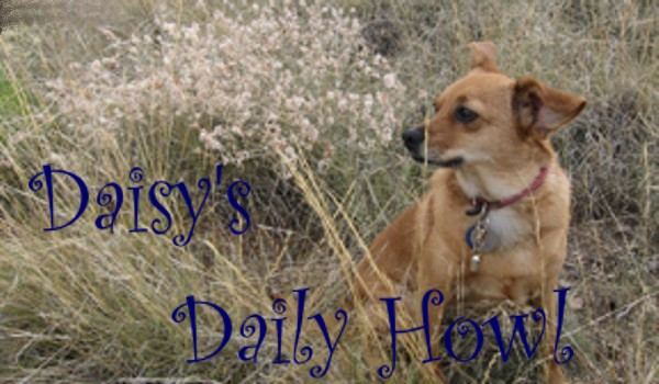 Daisy's Dog Blog                                                             *with cats