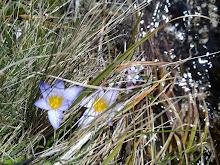 Flor dos matos
