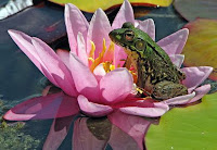 There is great victory in the Lord, frog