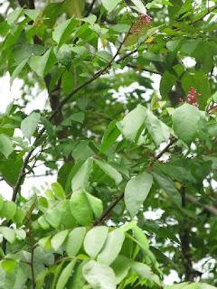 Goodboons 39 blog arbres a clous et autres merveilles for Plante zanzibar