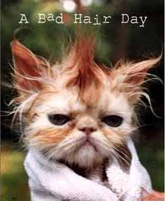 Wunschbilder - Seite 4 Bad-hair-day