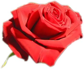 Idee cadeau original: Trouver un cadeau st valentin