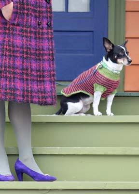 [dog+sweater+kristin+nicholas+#1.jpg]