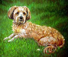 Dog Pet Portrait by Robin Zebley