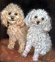 Cockerpoo Pet Portrait by Robin Zebley