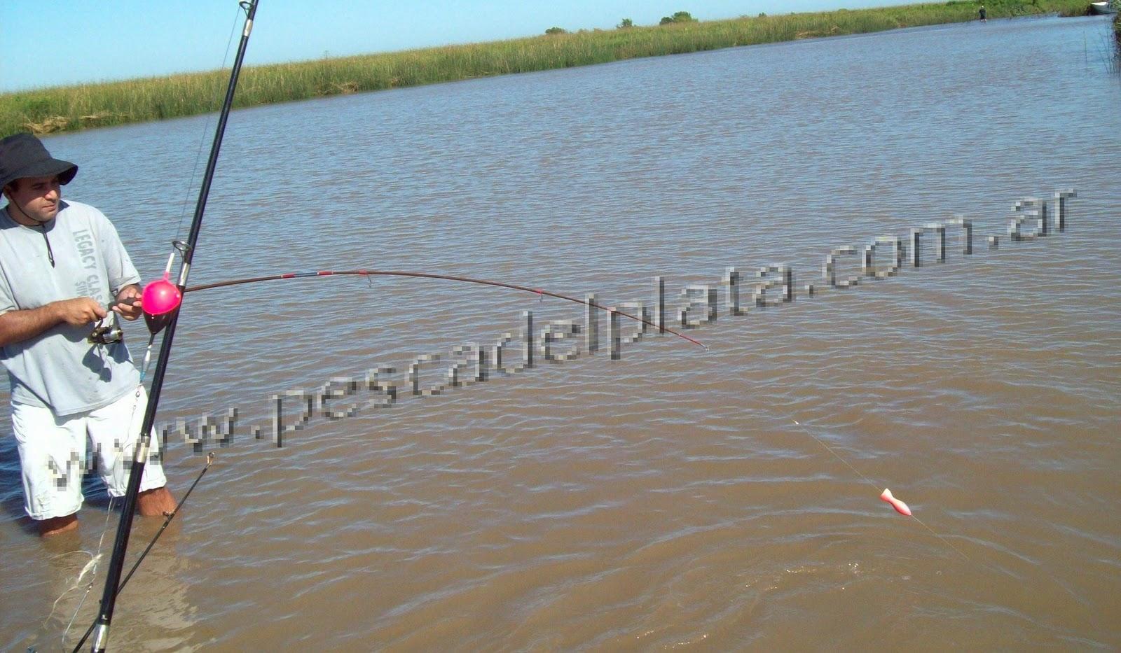 El informe en esta semana sobre la pesca en la esfera de Kursk