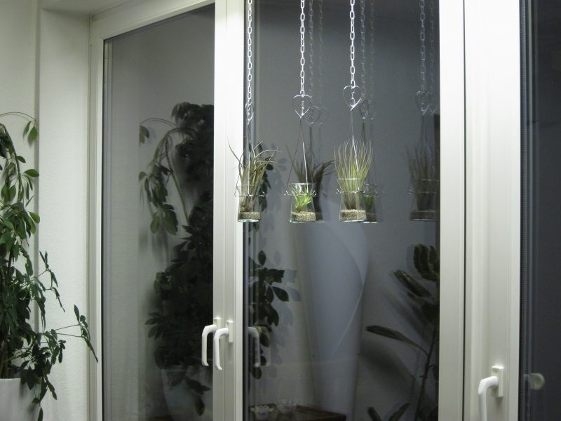 haus tier wir tillandsien in gl sern. Black Bedroom Furniture Sets. Home Design Ideas