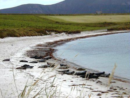 L'Ecosse Seals+on+beach+2000