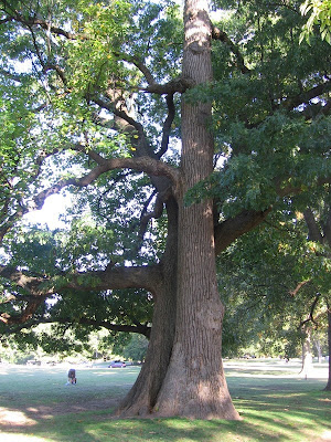 If the Sweetgum and Oak can dance, why can't we?, Overton Park, Memphis