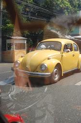 beetle yellow