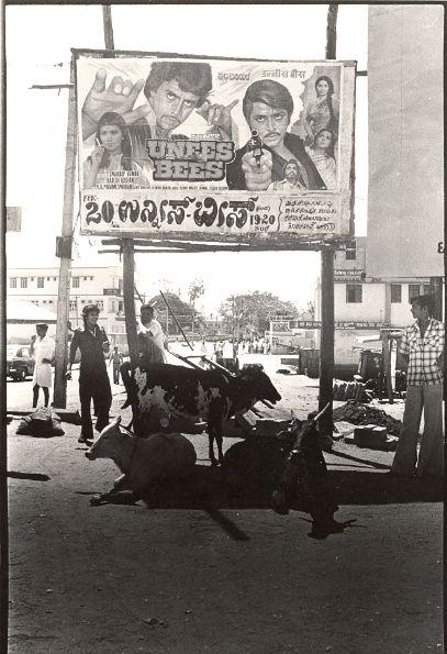 Cinema poster & cows -  India street scene 1970's