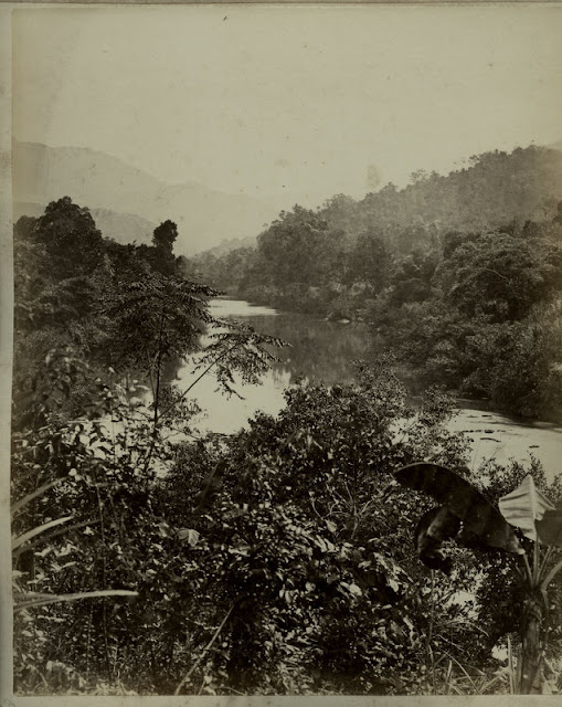 c.1890%2527s+PHOTO+INDIA+CEYLON+RIVER+THROUGH+TREES