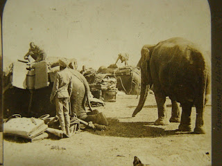 Army+Elephants+of+India+Stereo+View+Photograph+1901