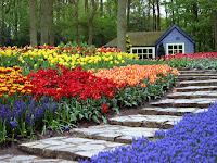 taman tulip
