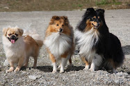 Mine nydelige hunder!