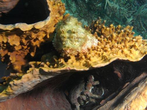 souper rencontre corail vaudreuil Montluçon