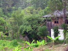 Shiatsu en la Selva