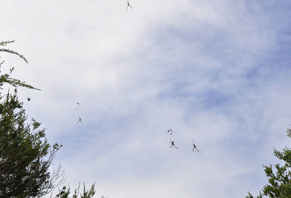 spiders in the sky
