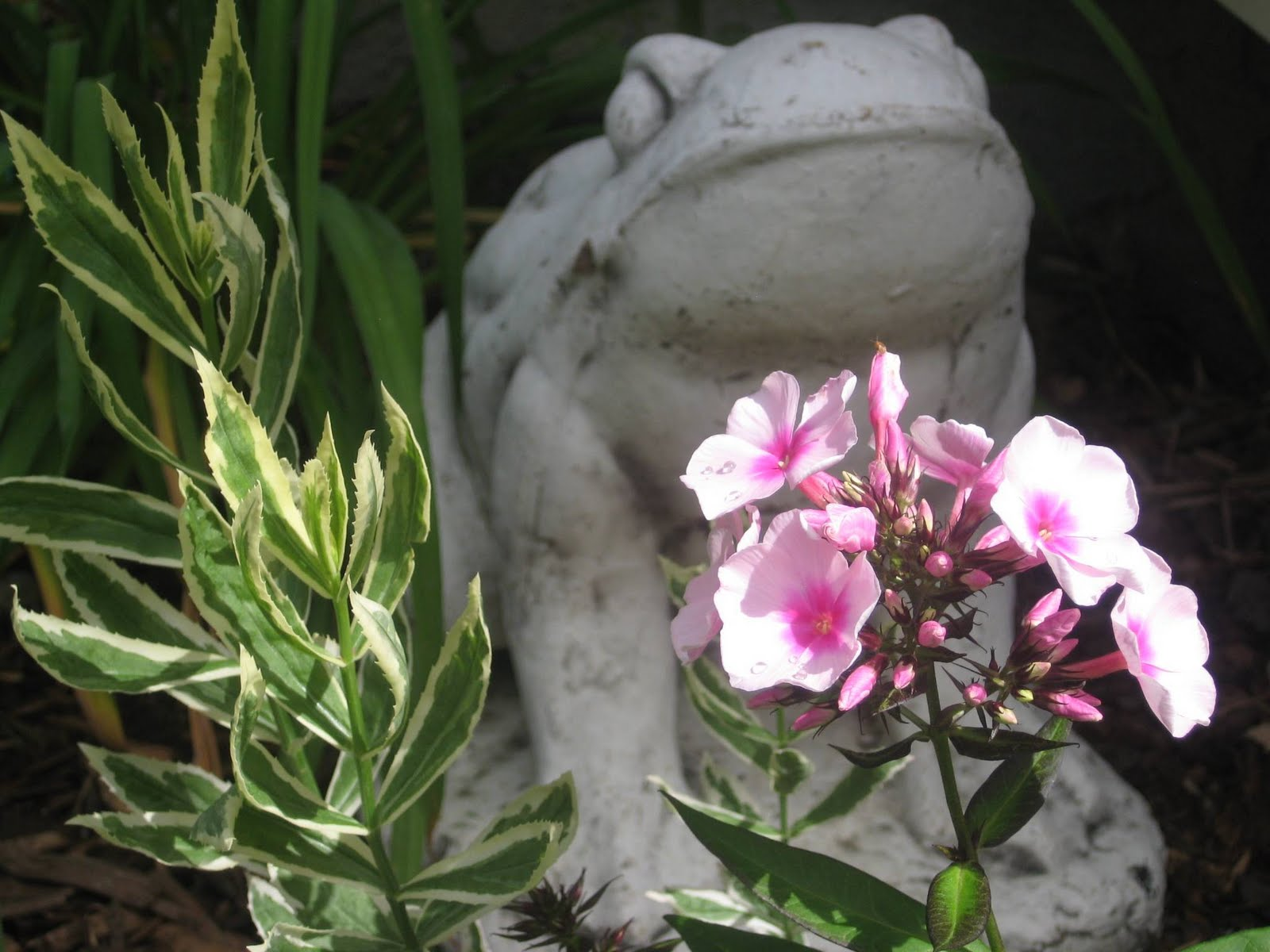 http://2.bp.blogspot.com/_pHp9NejG2Eg/THGKA0w71GI/AAAAAAAABU0/nNhTxYQ1Z0E/s1600/Frog+%26+phlox.jpg