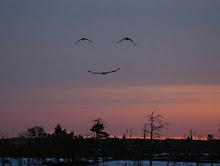 Até a Natureza sorri quando juntos resgatamos o Evangelho da Vida!